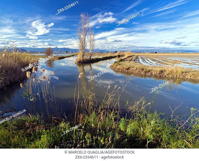 Intersection of drainage and irrigation channels. Ebro River Delta Natural Park, Tarragona province, Catalonia, Spain