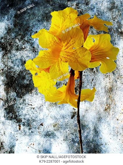 A yellow flower against a blue background