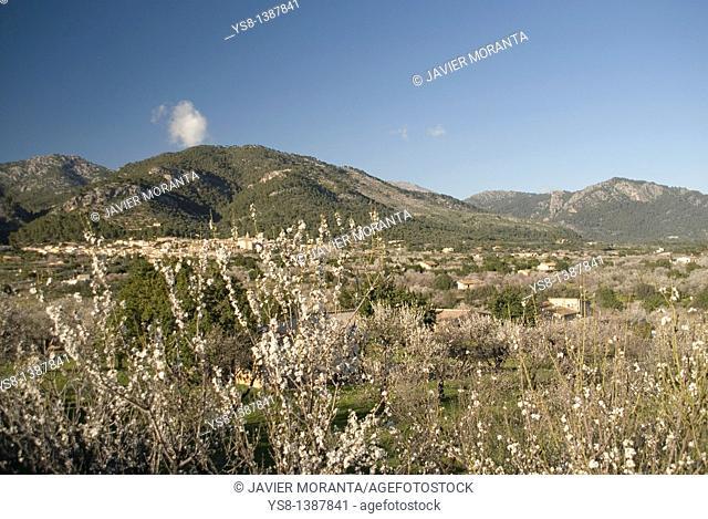 Spain, Balearic Islands, Mallorca, Views Majorcan village of Selva with almond blossom