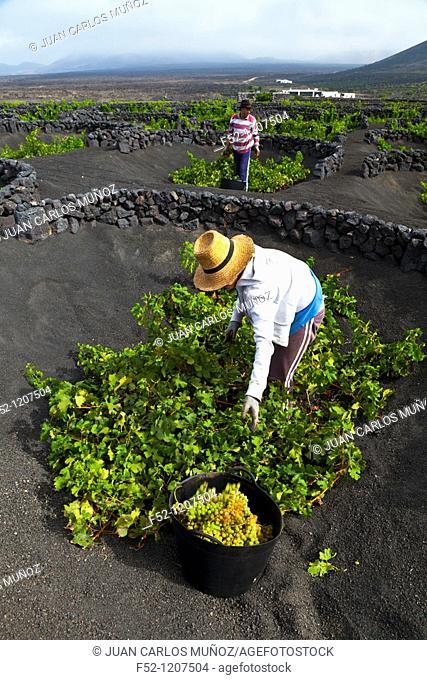 Malvasia vineyards, La Geria, Lanzarote, Las Palmas, Canary Islands, Spain