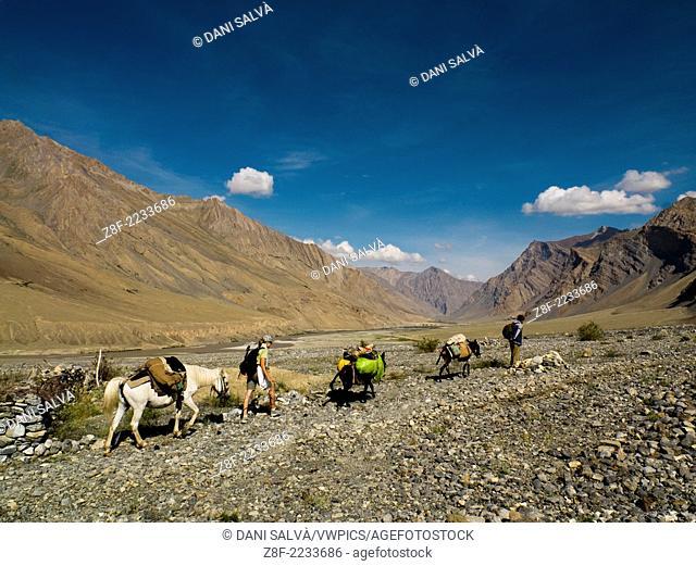 Trekkers with horses on a trekking in Zanskar valley