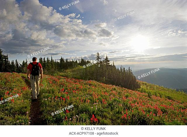 A hiker walks an established trail while enjoying the sunrise at Sun Peaks Resort, east of Kamloops, Thompson Okanagan region of British Columbia, Canada