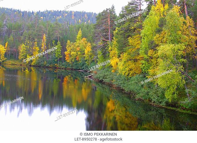 Autumn colors in Oulanka National Park, Finland