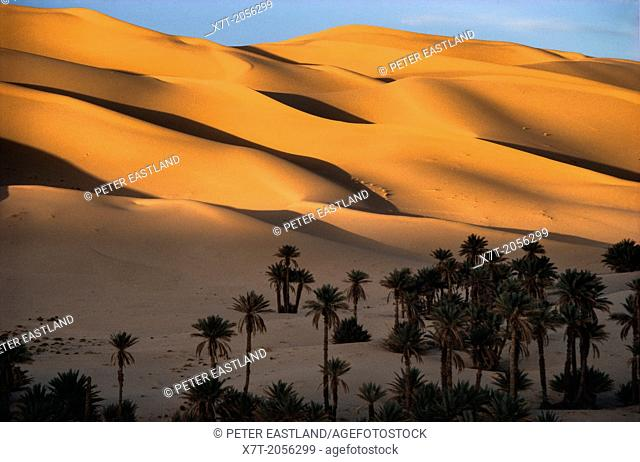 Sand dunes of the Grand Erg Occidental, at sunset, at the oaisis of Taghit in North west Algeria
