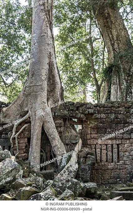 Spung tree at Ta Prohm Temple, Angkor Archaeological Park, Krong Siem Reap, Siem Reap, Cambodia