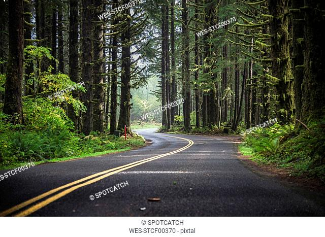 USA, Washington State, Hoh Rain Forest, Road