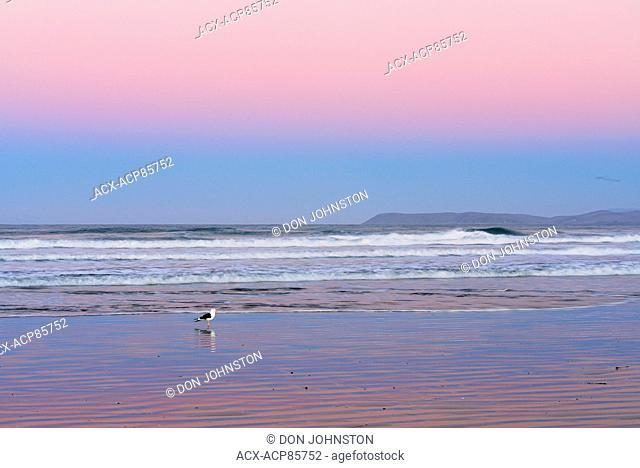 Morro beach at dawn, Morro Bay, California, USA
