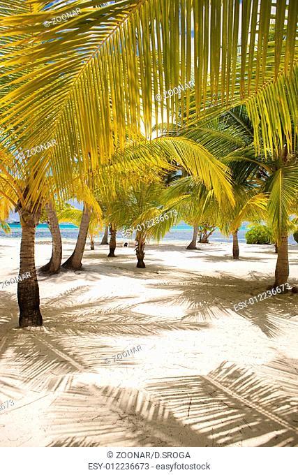 Fresh Look Palm Trees at Beach