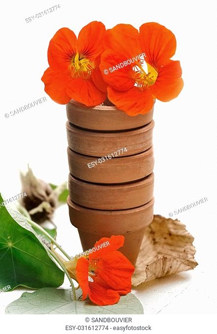 flowers in little terra cotta pots with leaf on white background