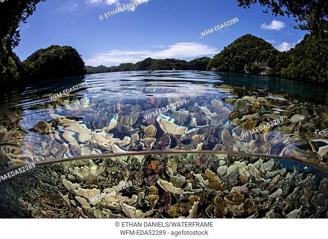 Coral Reef of Palau, Micronesia, Palau