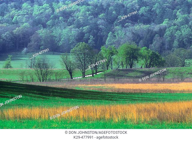Fresh grasses and dead grasses in pasture at Cades Cove. Great Smoky Mountains NP. Tennessee. USA