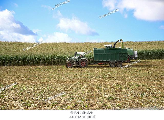 Field Of Maize Being Harvested Into Trailer