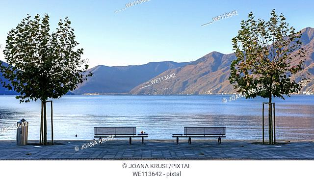 Sycamore trees and benches at the lakefront Ascona, Ticino, Switzerland, overlooking Lake Maggiore