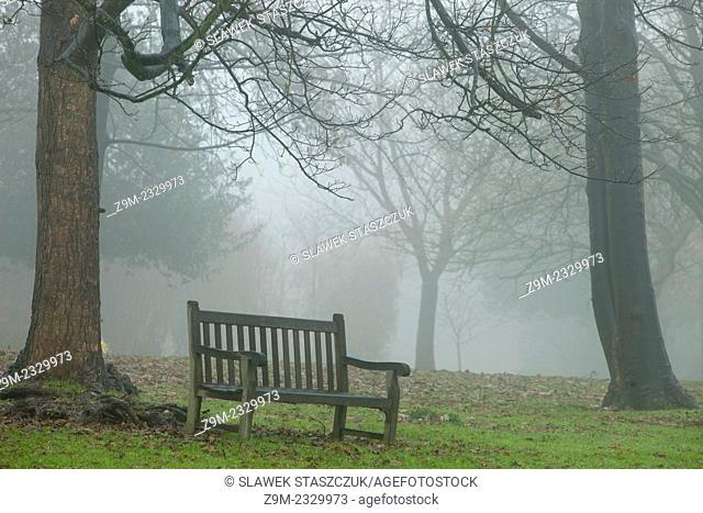 Foggy winter day in a park in Brighton, East Sussex, England, United Kingdom