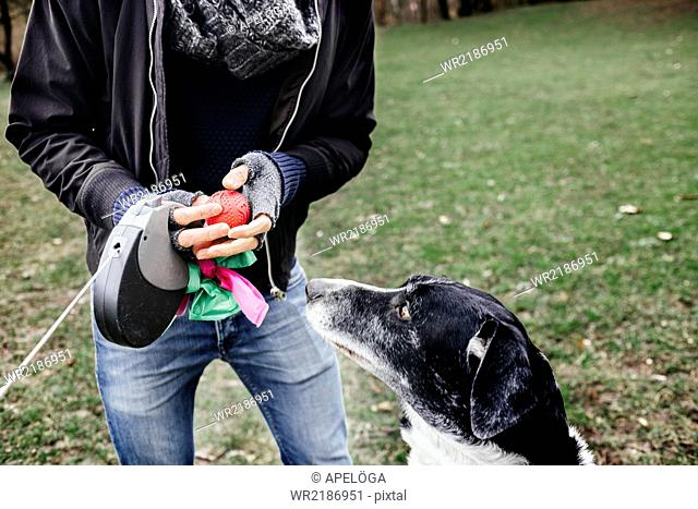 Midsection of man holding ball by mixed-breed dog at park