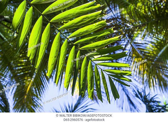 U. S. Virgin Islands, St. Thomas, St. Peter, tropical vegetation