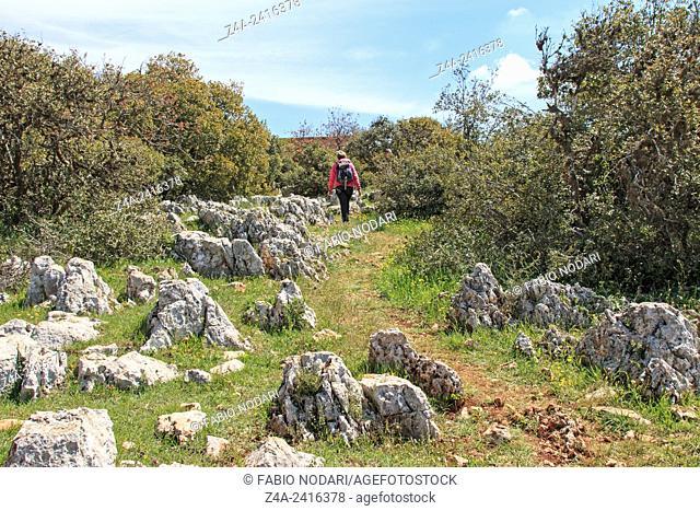 Amman, Jordan: Tourist walking in the Ajlun Nature Reserve in Jordan