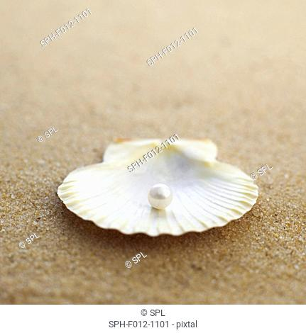 Clam shell with pearl inside