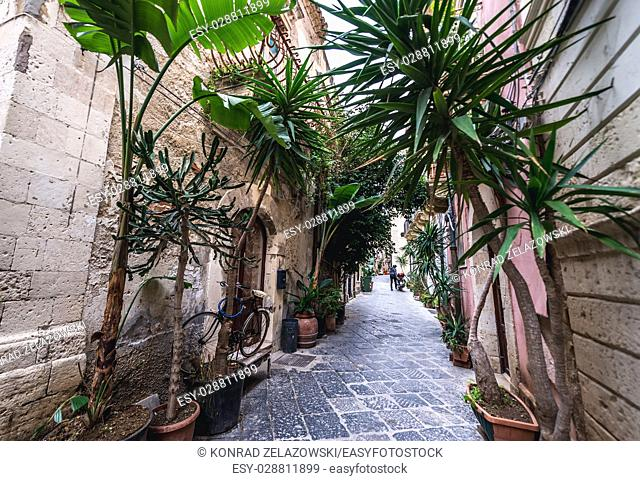 Green plants on a narrow street on the Ortygia island, historical part of Syracuse city, southeast corner of the island of Sicily, Italy