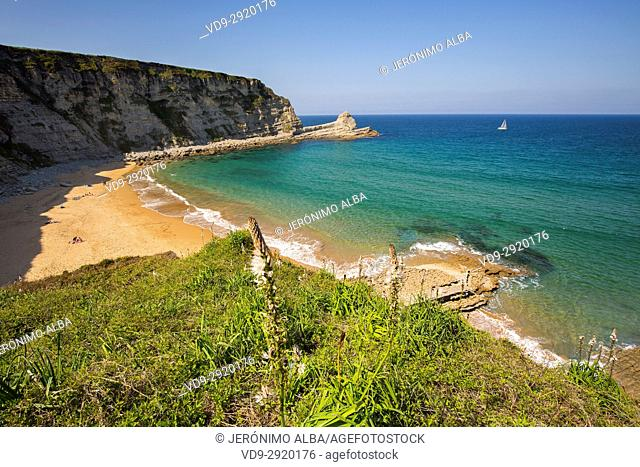 Meadow of green grass and flowers. Langre beach, Ribamontan al Mar, Trasmiera coast. Cantabrian Sea. Cantabria Spain. Europe