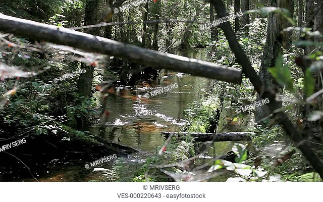 impassable river in the forest