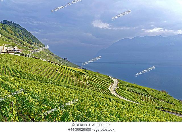 Weinberge, Weinterrassen, Genfer See