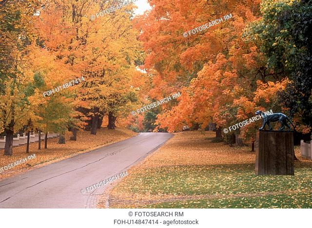 fall, Bennington, VT, Vermont, Colorful foliage along a road in Bennington in autumn