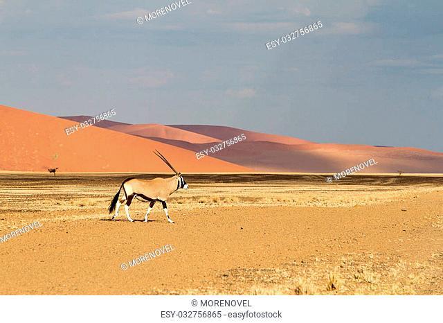 Oryx In the Sossusvlei desert, Namibia