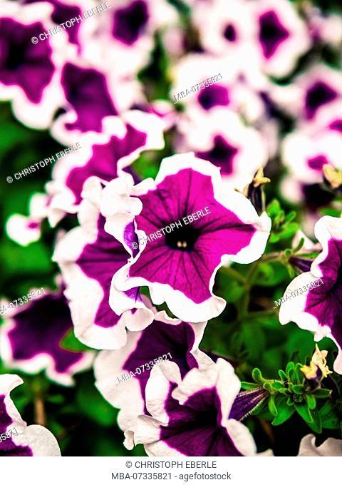 Purple flowerbed