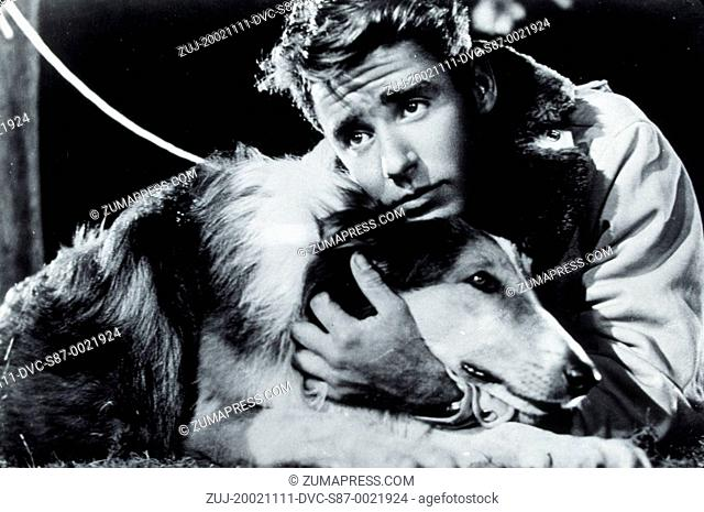 1945, Film Title: SON OF LASSIE, Director: SYLVAN SIMON, Studio: MGM, Pictured: ANIMALS (WITH ACTORS), DOG, PETER LAWFORD