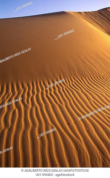 El Pinacate dunes, Sierra Blanca in Background / Dunas del Pinacate al atardecer. Las dunas de la reserva de la biosferal del Pinacate son las más extensas de...