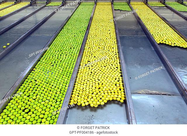 FLOATING RAILS FOR SORTING BY SIZE AND COLOR, LIMBOR ORGANIC COOPERATIVE, FRUIT-PRODUCING STATION, APPLE FARMERS' COLLECTIVE FOR APPLES OF THE LIMOUSIN, AOP