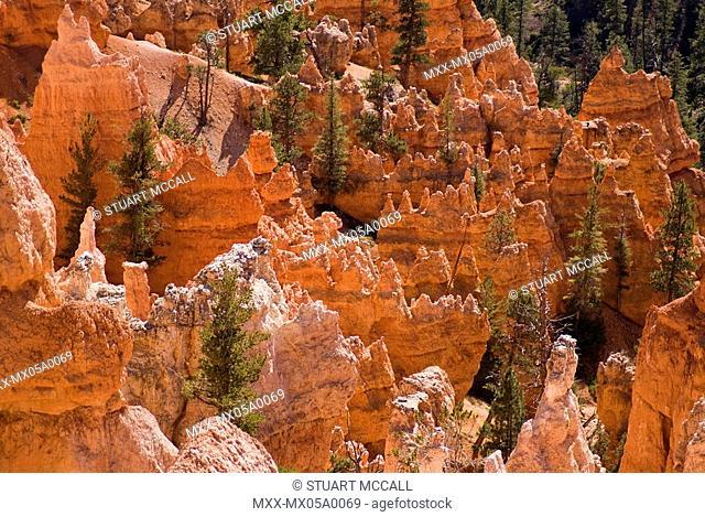 USA, Utah, Bryce Canyon. hoodoos galore in Bryce amphitheater