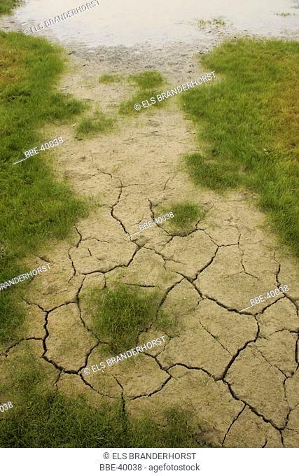 Cracked soil soil (with pioneer vegetation