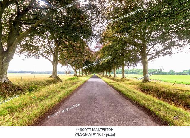 United KIngdom, East Lothian, empty road, tree lined