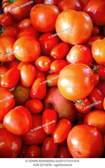 Pile of assorted tomatoes. Lisbon Maine USA