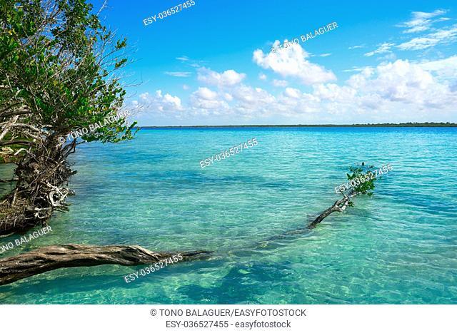 Laguna de Bacalar Lagoon mangroove in Mayan Mexico at Quintana roo