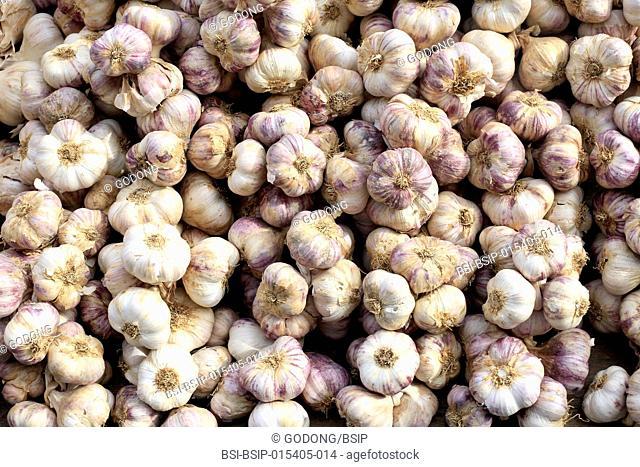 Purple garlic on a market. France