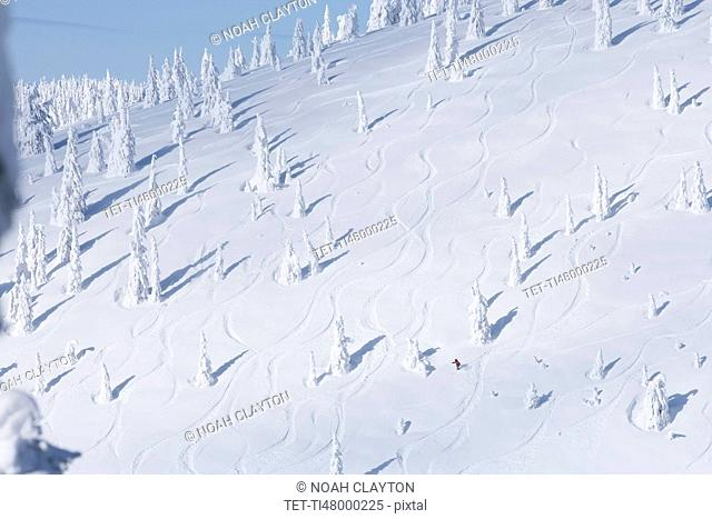 Ski slope with snowy trees