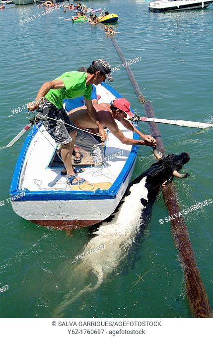 Bull rescue in water, Denia, Alicante, Spain, Europe