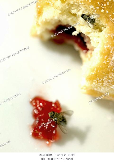 Food - Doughnut with Jam and Fly