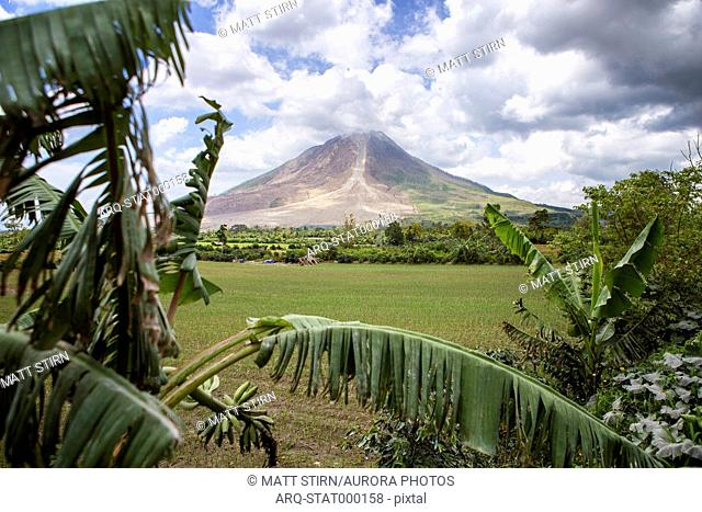 Mount Sinabung, an active volcano, erupts over a coffee plantation on the island of Sumatra, Indonesia
