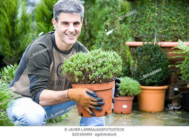 Gardener transplanting flower pots. Garden, Tree nursery. Gipuzkoa, Euskadi. Spain