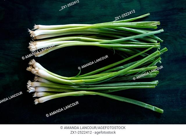 Whole spring table onion with roots and tips on greenish blue wood grain with room for copy