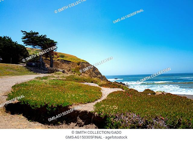 A cypress tree grows on a rocky outcropping as waves break on the shore at Mori Point, part of the Golden Gate National Recreation area, in Pacifica, California