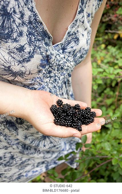 Close up of hand holding fresh blackberries