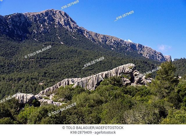 puig de ses Monges, lapiaz, Lluc, sierra de Tramuntana, Mallorca, balearic islands, spain, europe