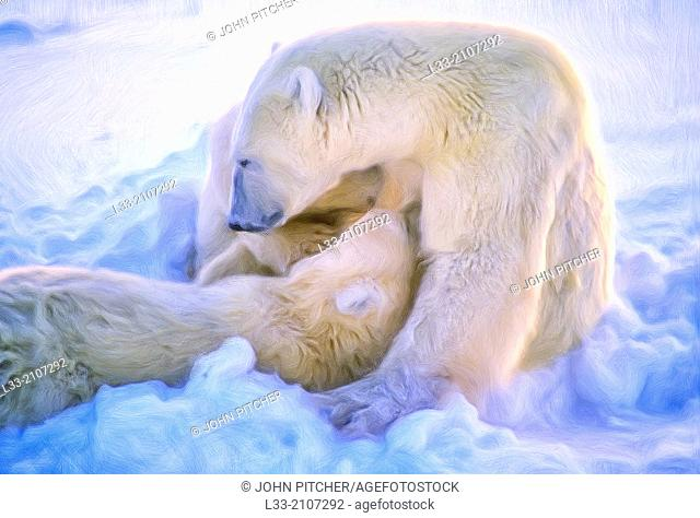 Polar bear nursing cubs, oil painting effect, digital art