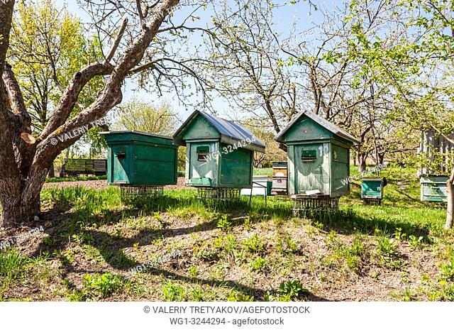 Ulyany, Kyiv region, Ukraine - Green beehive with bees at the apiary in Ukraine. Fruit garden with green grass at spring time