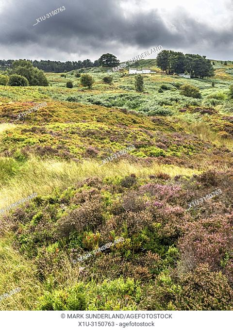 Looking up to White Wells old bath house amongst the heather on Ilkley Moor West Yorkshire England